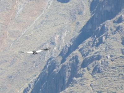 condor-canon-colca1