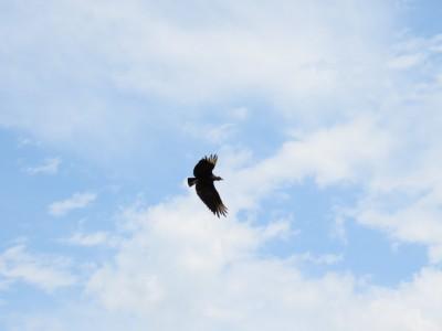 oiseau-pampa3