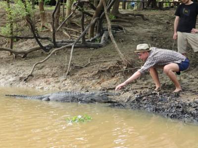 thibaut-aligator