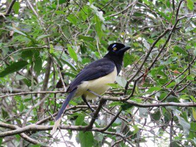 oiseau-iguazu
